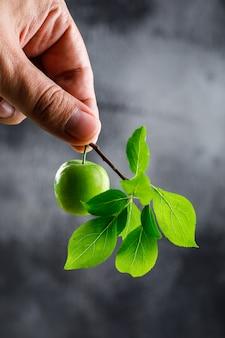 Ameixa verde na mão com vista lateral do ramo em uma parede escura