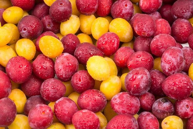 Ameixas amarelas e vermelhas em gotas de água