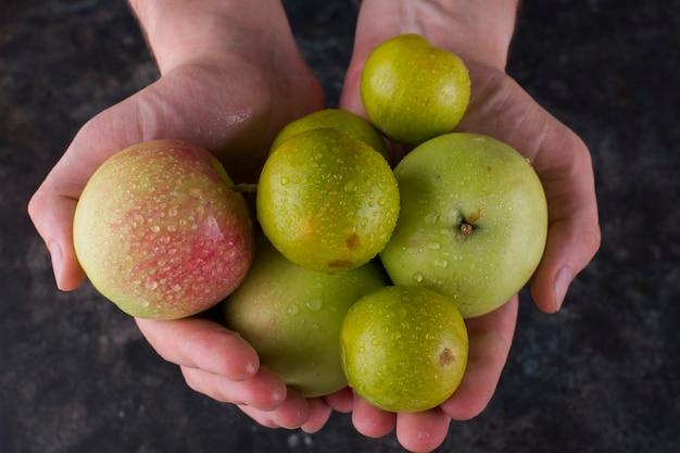 Ameixas de cereja verdes e maçãs nas mãos de uma pessoa