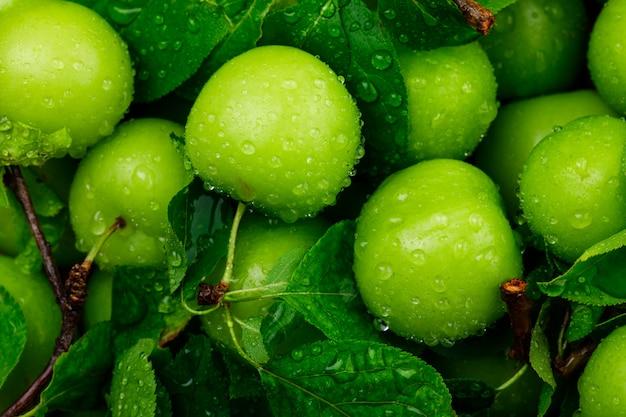 Ameixas verdes chuvosas com close-up de folhas verdes