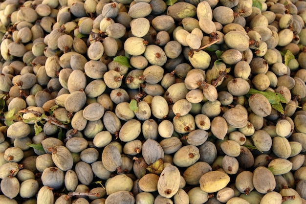 Amêndoa fresca com preço em um mercado de produtores locais