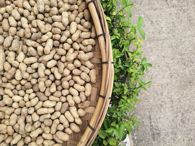 Amendoim cru sun banho para secar. para ser processado em manteiga de amendoim.