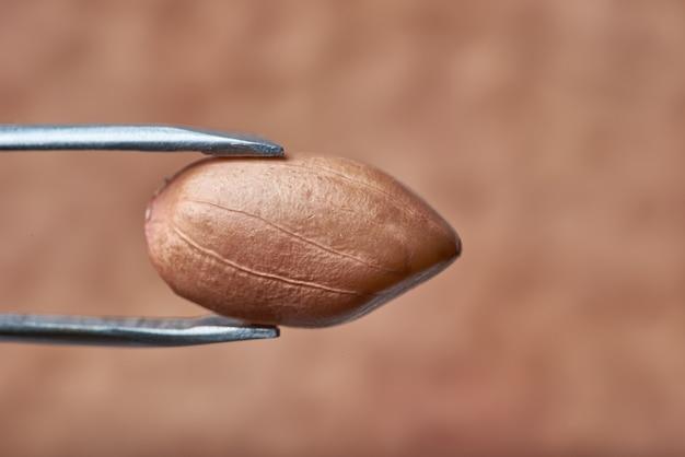 Amendoim é benéfico para o corpo