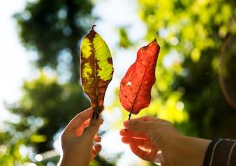 Amigos, segurando, folhas