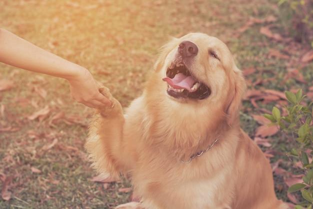 Amizade entre humano e cão