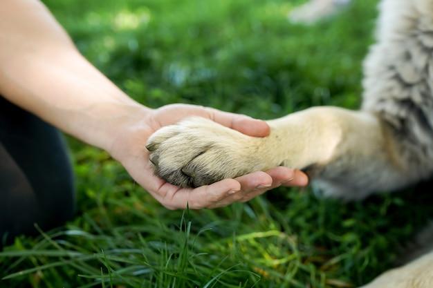 Amizade entre humanos e cães - apertando a mão e a pata em cena de grama verde