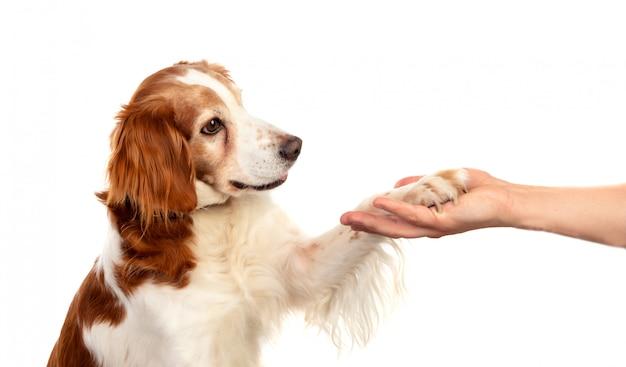 Amizade entre um cão e seu dono