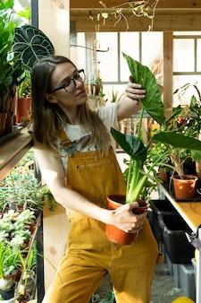 Amo a jardineira que cuida de plantas, trabalhando com plantas domésticas em uma grande estufa com flores diferentes
