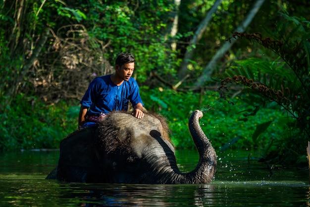 Amor de mahout com seu elefante, tailândia