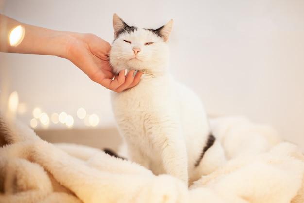 Amor do gato pelo aperto de mão na mão.
