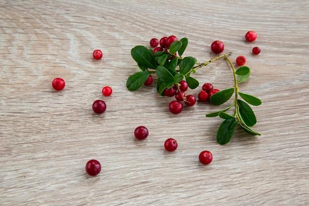 Amora madura na floresta de outono. baga muito útil e deliciosa. ajuda com doenças renais.