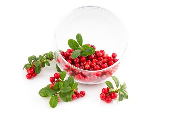 Amoras silvestres, foxberry, mirtilo com folhas em uma tigela de vidro