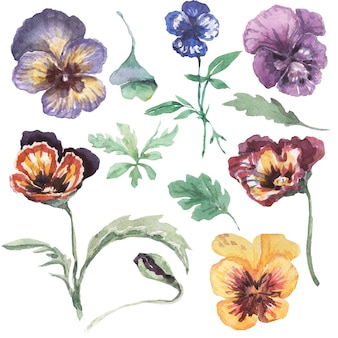 Amores-perfeitos, flores, flores, flora. ilustração em aquarela desenhada à mão. primavera. roxo, amarelo, rosa