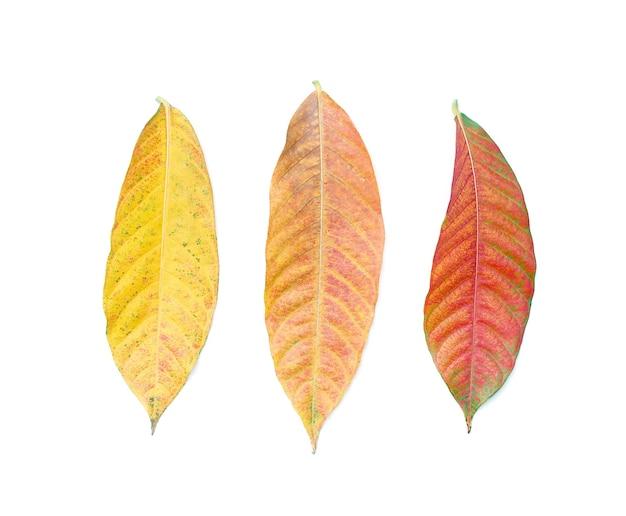 Amostras de tecido colorido