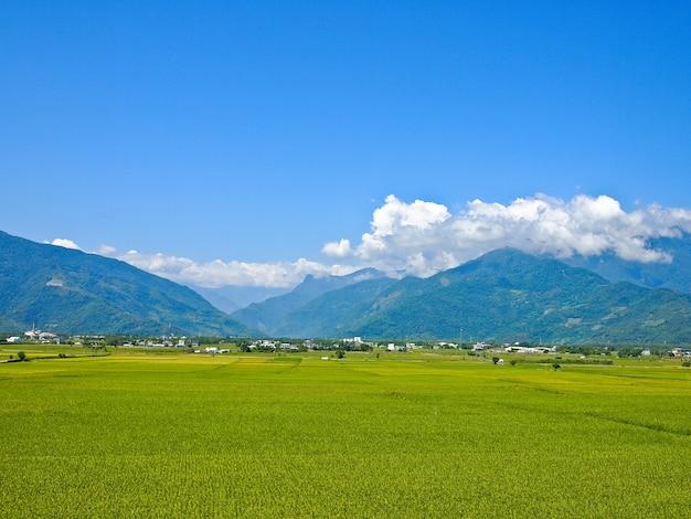 Amplo arrozal cercado por montanhas e céu azul