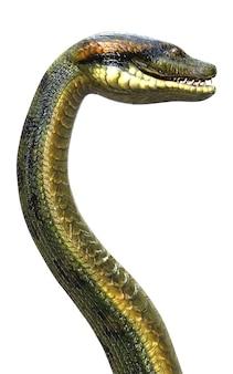 Anaconda, boa constrictor cobra venenosa maior do mundo, isolada no fundo branco