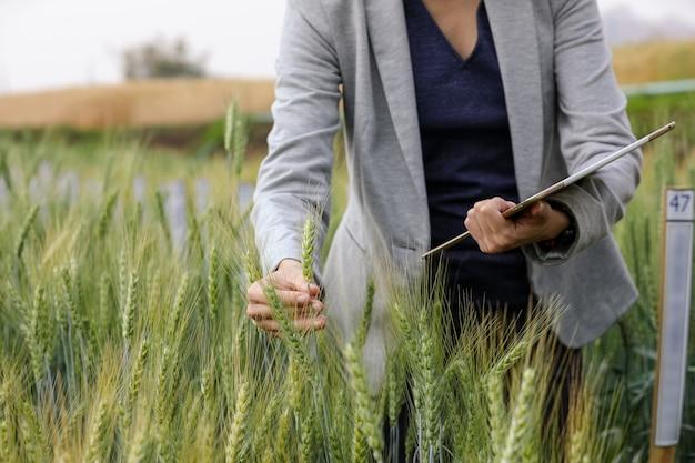 Análise de negócios usando o desenvolvimento de dados de análise de tablet pc com ícone visual na fazenda de viveiro de campo de cevada, agricultura inteligente, tecnologia digital, conceito de inovação agrícola.