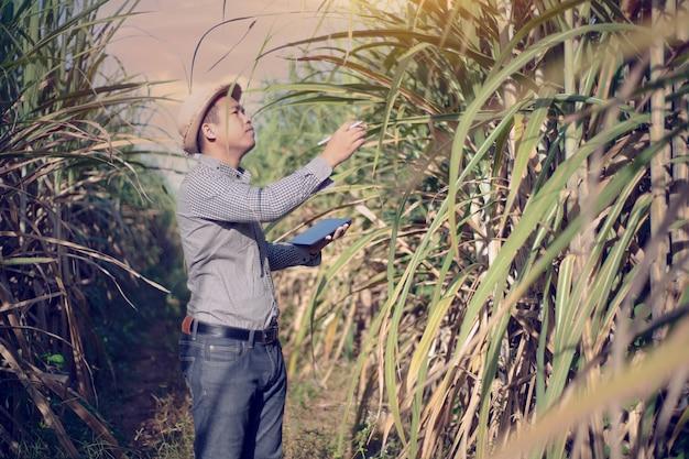 Análise do agricultor sobre o crescimento da cana-de-açúcar no campo, conceito de agricultura inteligente