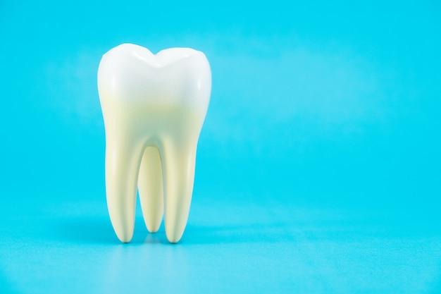 Anatomia do dente no fundo azul.