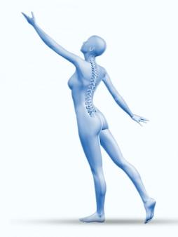 Anatomy backbone