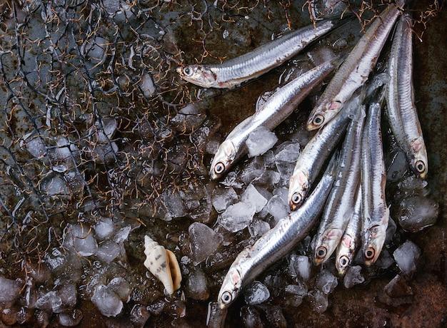 Anchovas frescas cruas peixes
