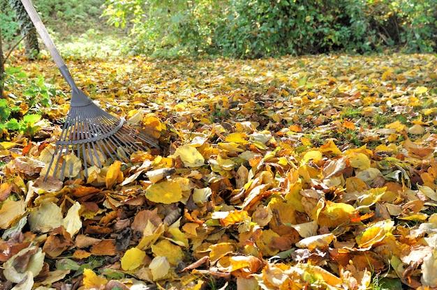 Ancinho em folhas