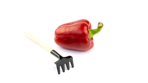 Ancinho pequeno e pimenta vermelha em um fundo branco. cultivo de vegetais.
