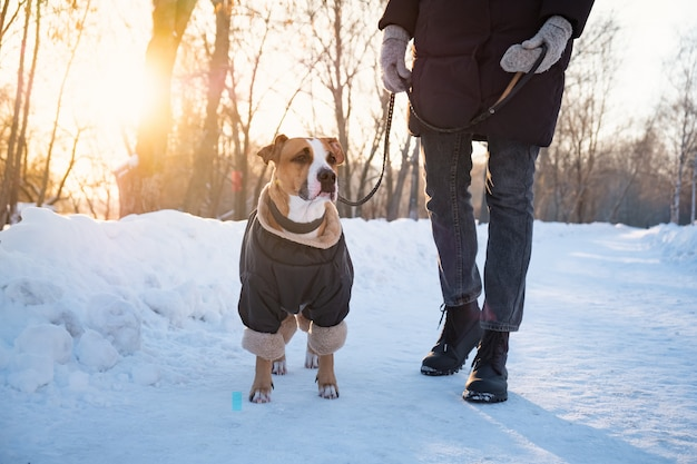 Andando com um cachorro em um dia frio de inverno. pessoa com um cachorro em roupas quentes na trela em um parque