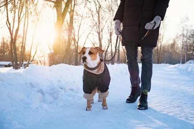 Andando com um cachorro no casaco em dia frio de inverno. pessoa com um cachorro em roupas quentes na trela em um parque