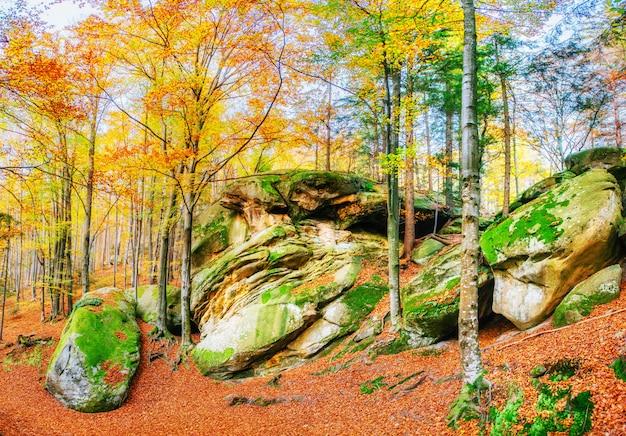 Andando em terreno rochoso na floresta. cárpatos, ucrânia