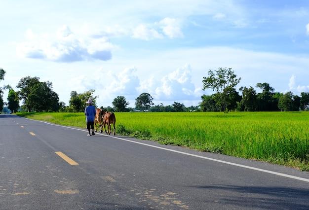Andar a cavalo na estrada