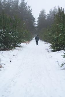 Ande na floresta de abetos de inverno.