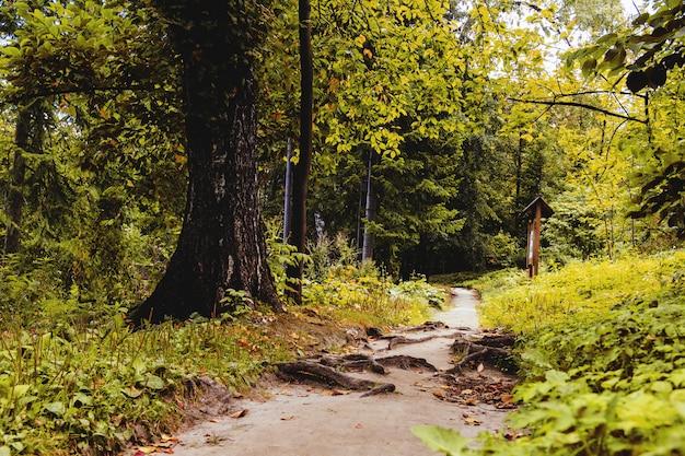 Ande na floresta