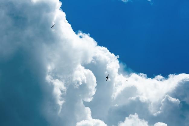 Andorinhões voam no céu contra as nuvens