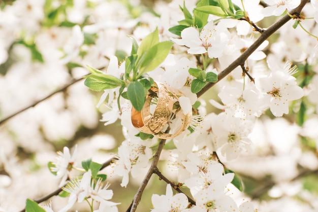 Anéis de casamento pendurado no ramo de florescimento na primavera