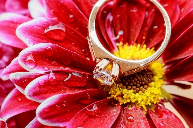 Anéis rosa dálias amor dia dos namorados de cor e suavizado - casamento de diamante