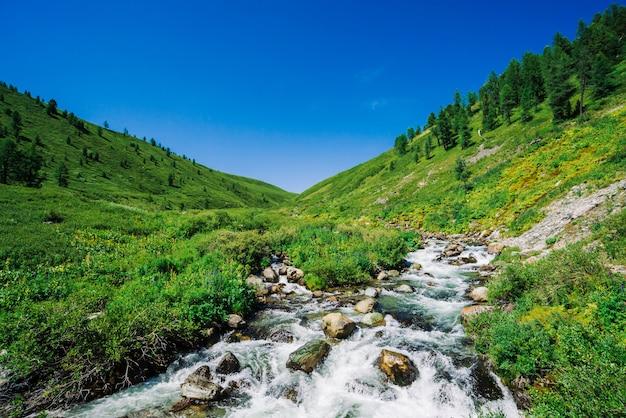 Angra da montanha no vale verde entre a vegetação rica das montanhas no dia ensolarado. fluxo de água rápido entre vegetação vívida e árvores sob o céu azul claro. incrível paisagem montanhosa da majestosa natureza de altai.