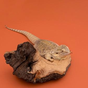 Ângulo alto de iguana sentada em um pedaço de madeira com espaço para cópia