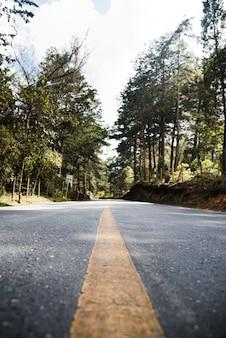Ângulo baixo da estrada florestal da paisagem