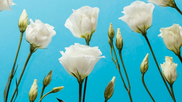 Ângulo baixo de rosas de primavera