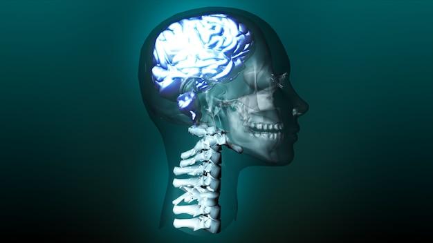 Animação altamente detalhada de um cérebro humano