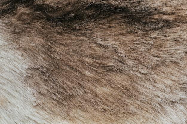 Animais de textura de lã natural, a pelagem do lobo com um pano escuro na vista lateral da pele