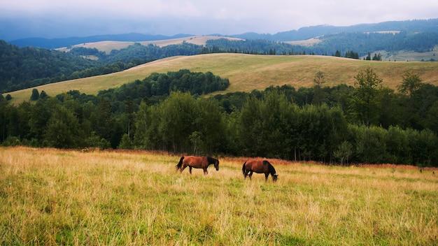 Animais domésticos, montanhas rochosas, cavalo marrom