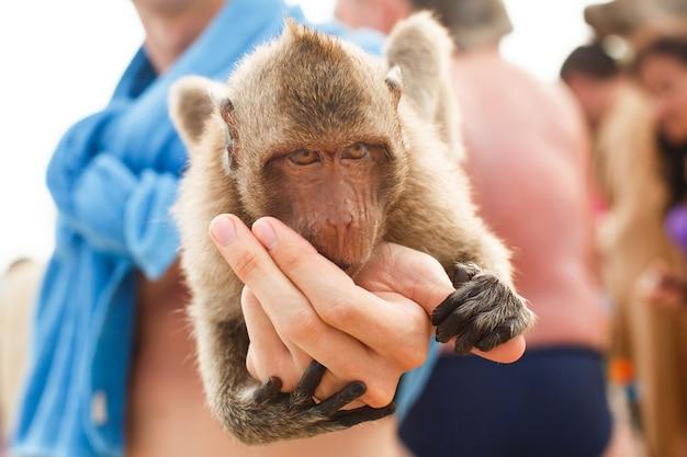 Animais e vida selvagem. fechar-se. macaco sentado na mão do homem e comendo com a palma da mão