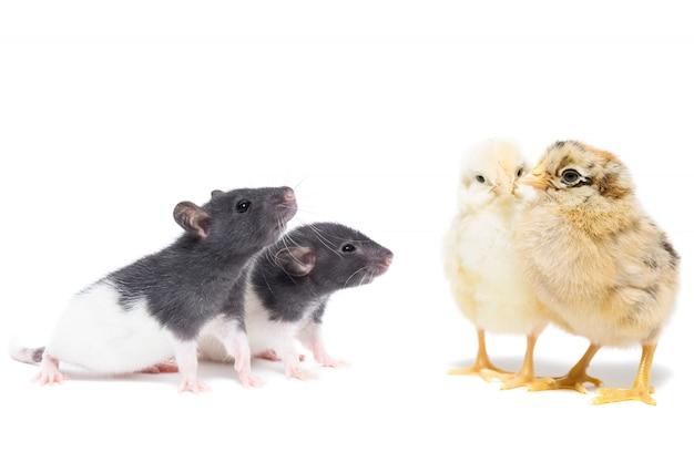 Animais em branco