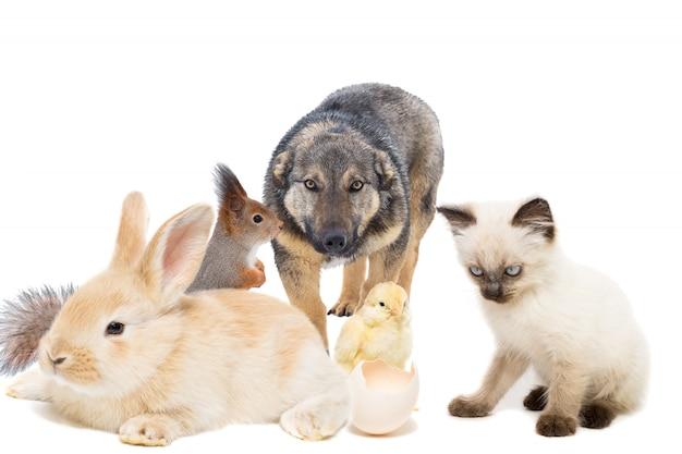 Animais em um fundo branco