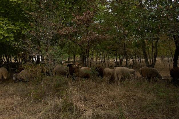 Animais no campo depois que as árvores reúnem a natureza