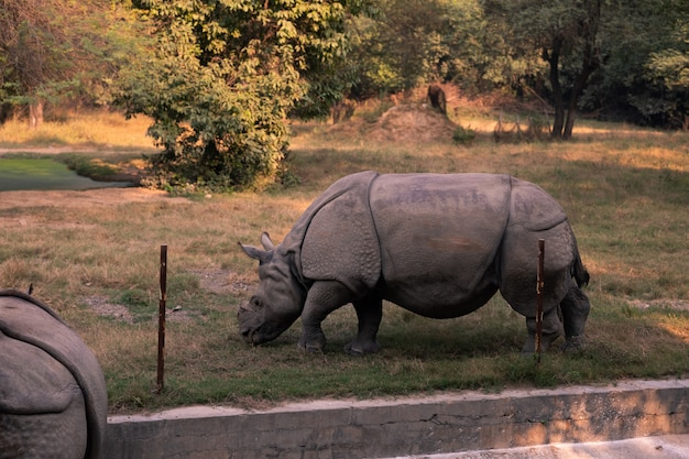Animais no zoológico de nova deli, índia.