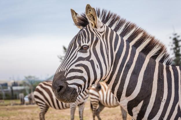 Animais selvagens africanos