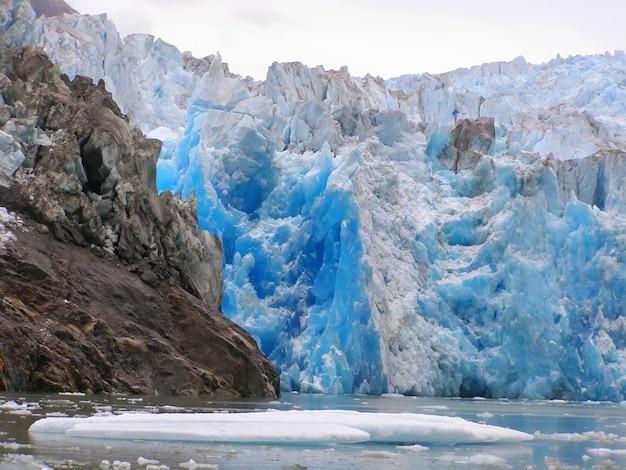 Animais selvagens do terror da geleira de ford do braço de tracy. sudeste do alasca, eua